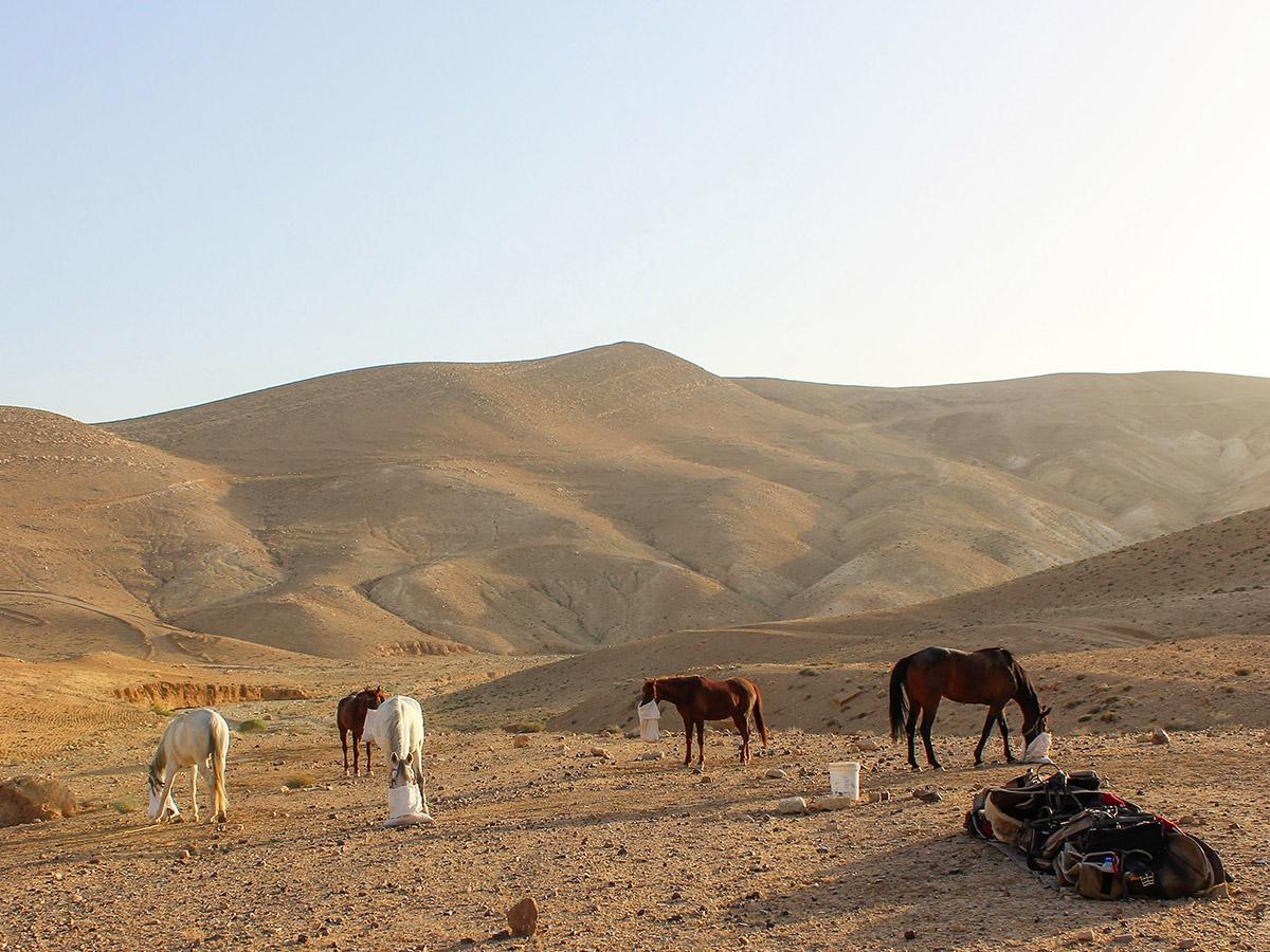 jordan-wadi-rum-6